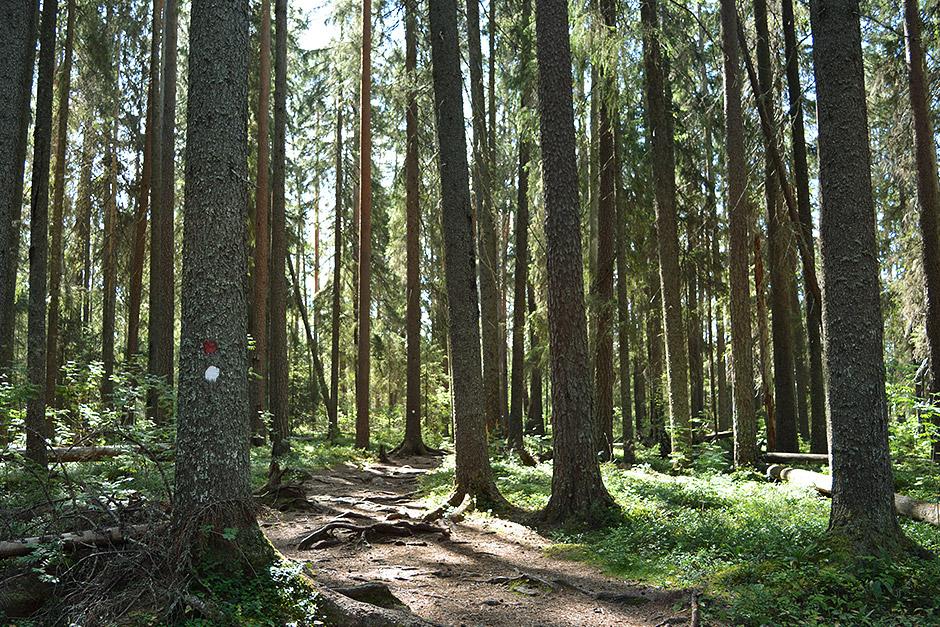 Pyhä-Häkki, Pyhä-Häkin kansallispuisto