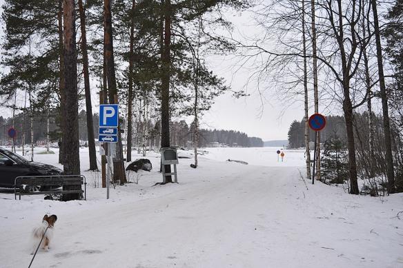 Laivonsaaren Nuotiopaikka Kuopio Rento Retkeilija