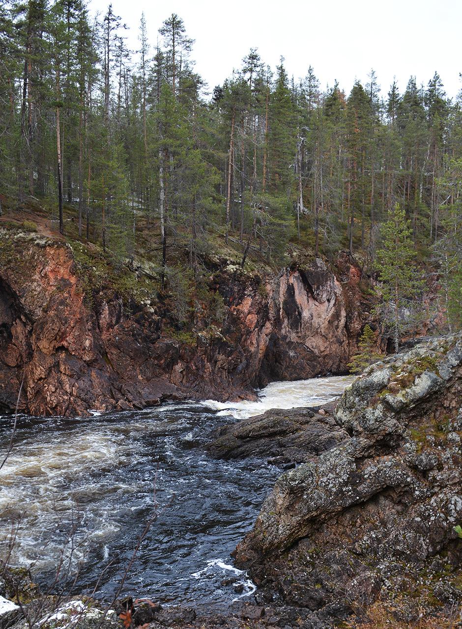 Kiutaköngäs Oulangan kansallispuistossa