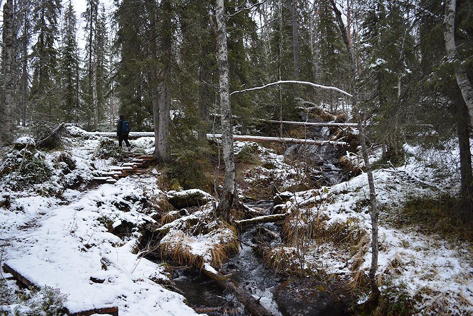 Rytiköngäs Oulangan kansallispuistossa