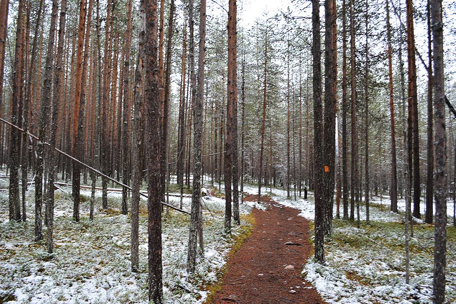 Rytikönkään reissun metsäpolkua