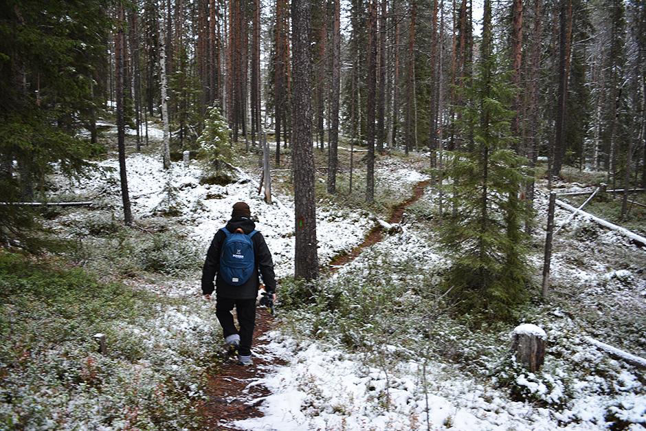 Rytisuon luontopolku kiertelee metsässä