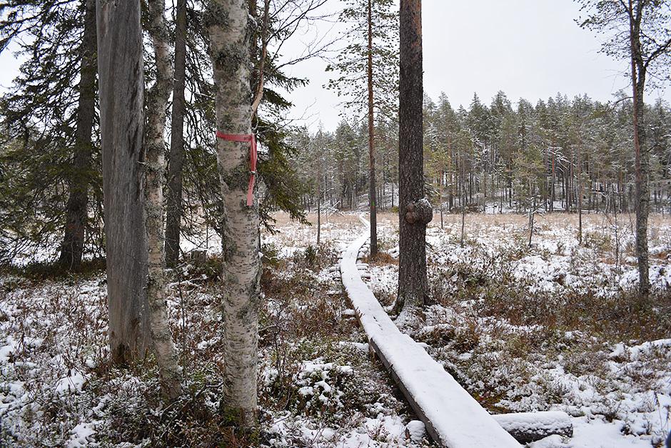 Uudet pitkospuut Rytikönkään reitillä