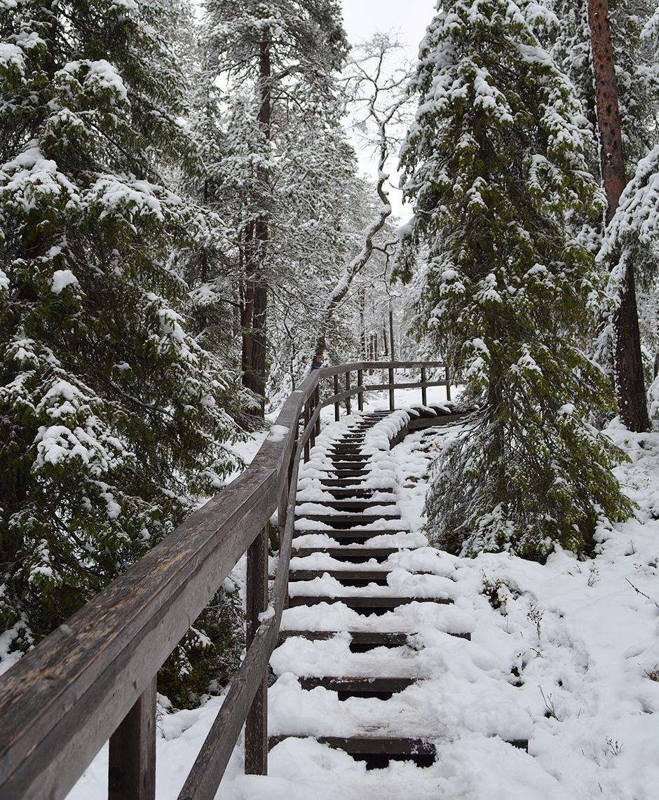 Valtavaaran talvireitin portaita