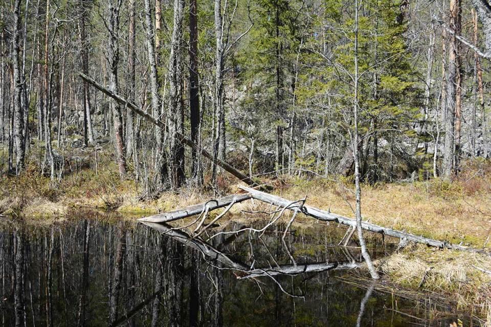 Jäppilän kivikurun Poikkilampi