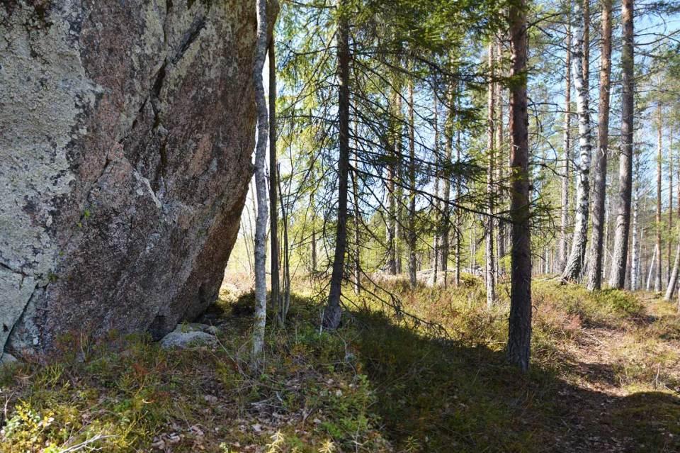 Iso kivi polun varrella Kivikurulla