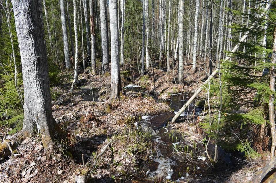 Pieni puro metsässä