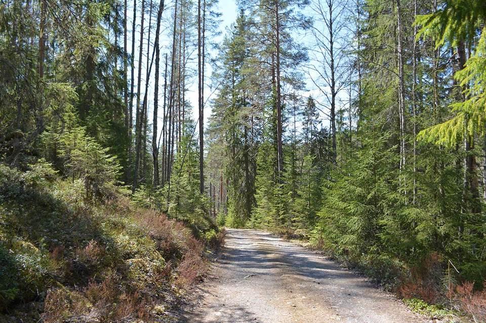 Tie alas Jäppilän kivikuruun