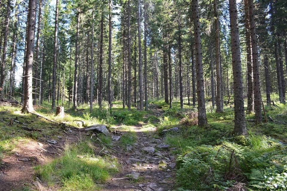 Metsää Orinoron polun varrella.
