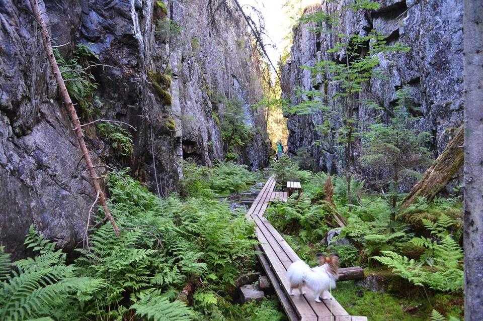 Mystinen metsämaisema Orinorolla