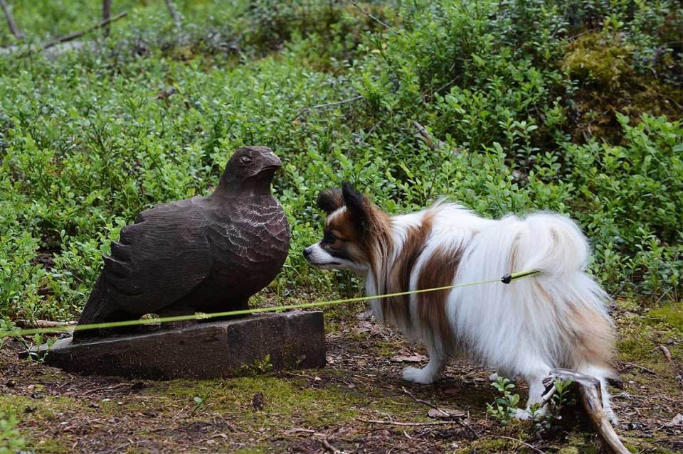 Haiku-koira ihmettelee puueläimiä