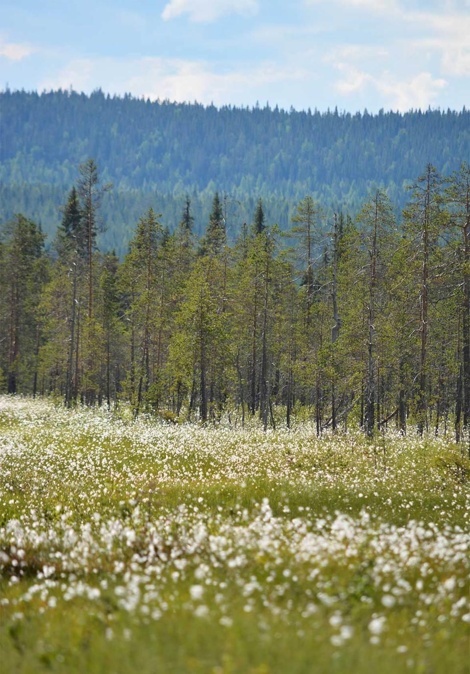 Suomaisema Teerivaaralla Syötteen kansallispuistossa