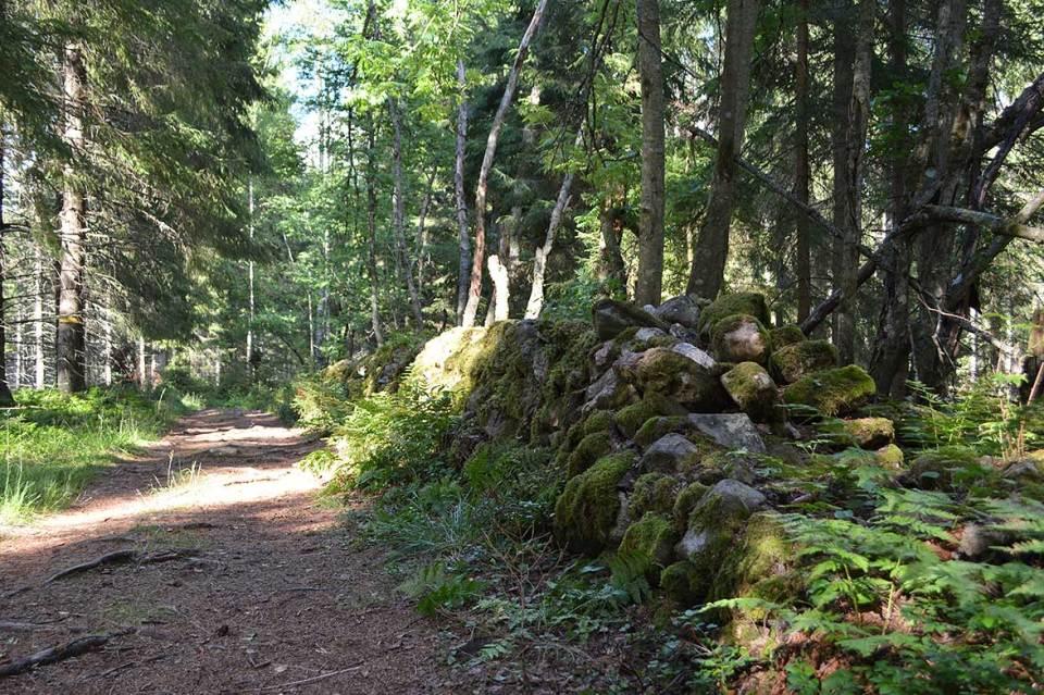 Vanha kiviaita metsässä