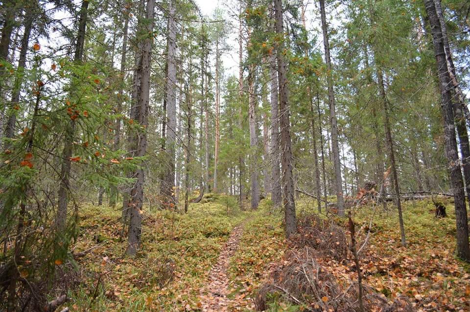 Polku kiemurtelee toiselle mäelle eli Akka-Vanulle.