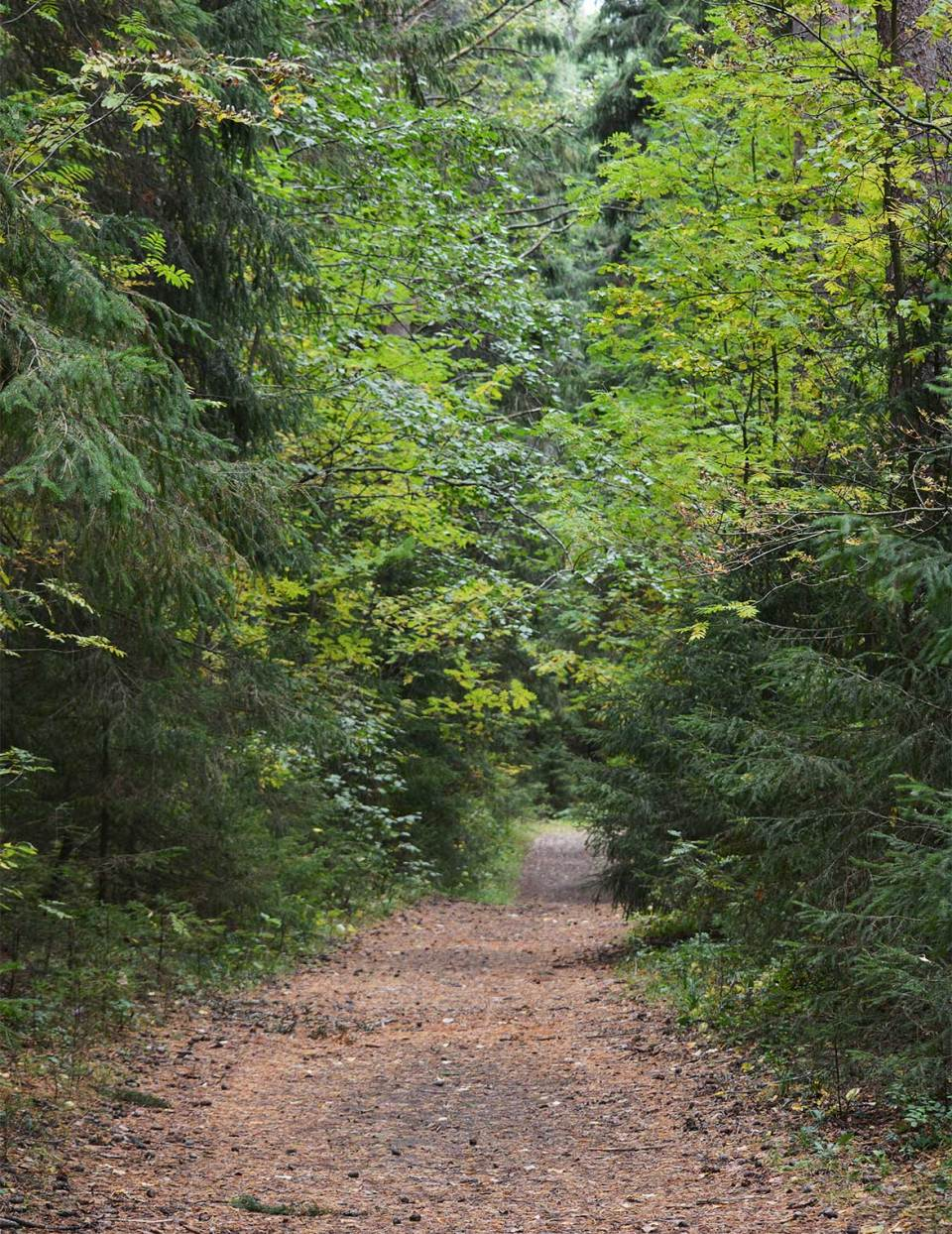 Polku vie takaisin Halmejoen lähtöpisteeseen.