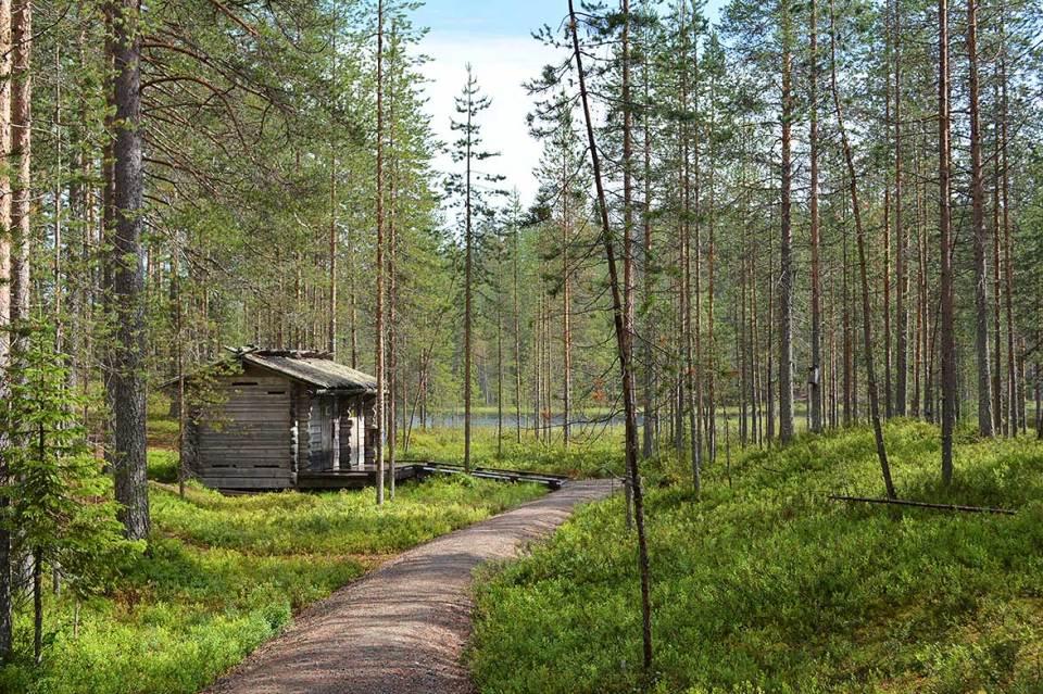 Rakennuksia Kellarilammen laavulla Syötteen kansallispuistossa