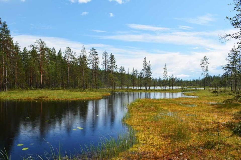 Suolampia Syötteen kansallispuistossa