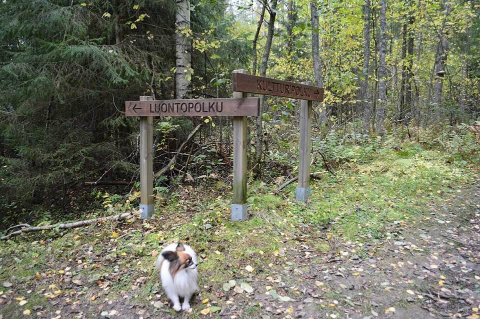 Luontopolku eli Halmejoen luontopolku sekä kulttuuripolku eli Pökösenmäen patteripolku Kuopiossa.