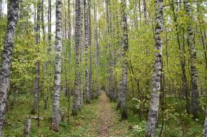 Halmejoen luontolku Kuopiossa