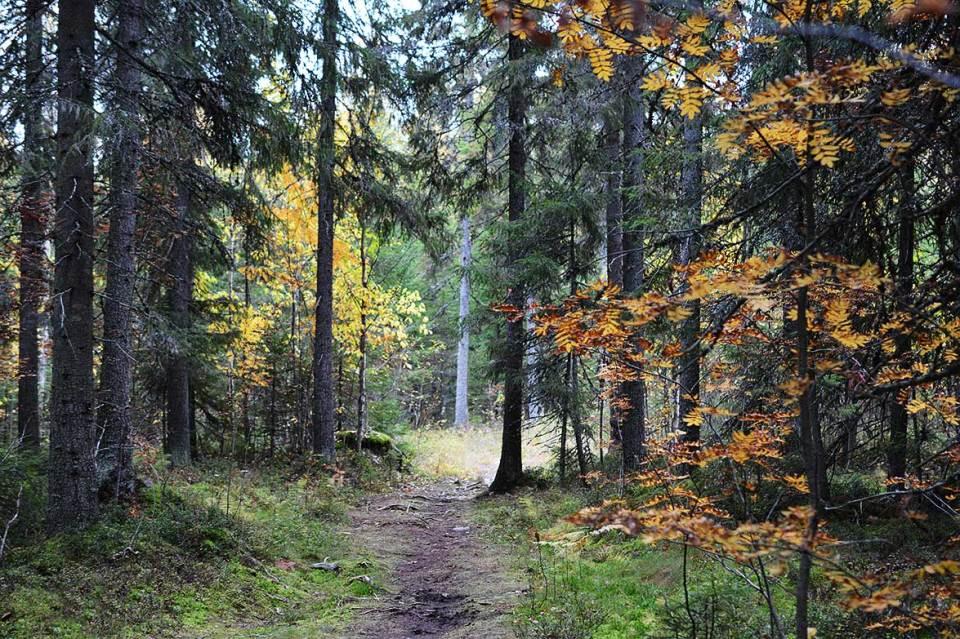 Ruskan sävyjä metsässä