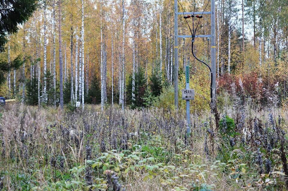 Kasvikkoa luontopolun varrella