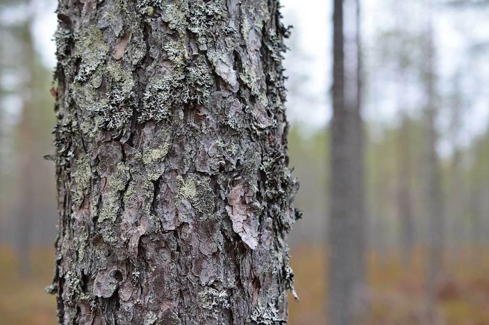 Puun yksityiskohtia