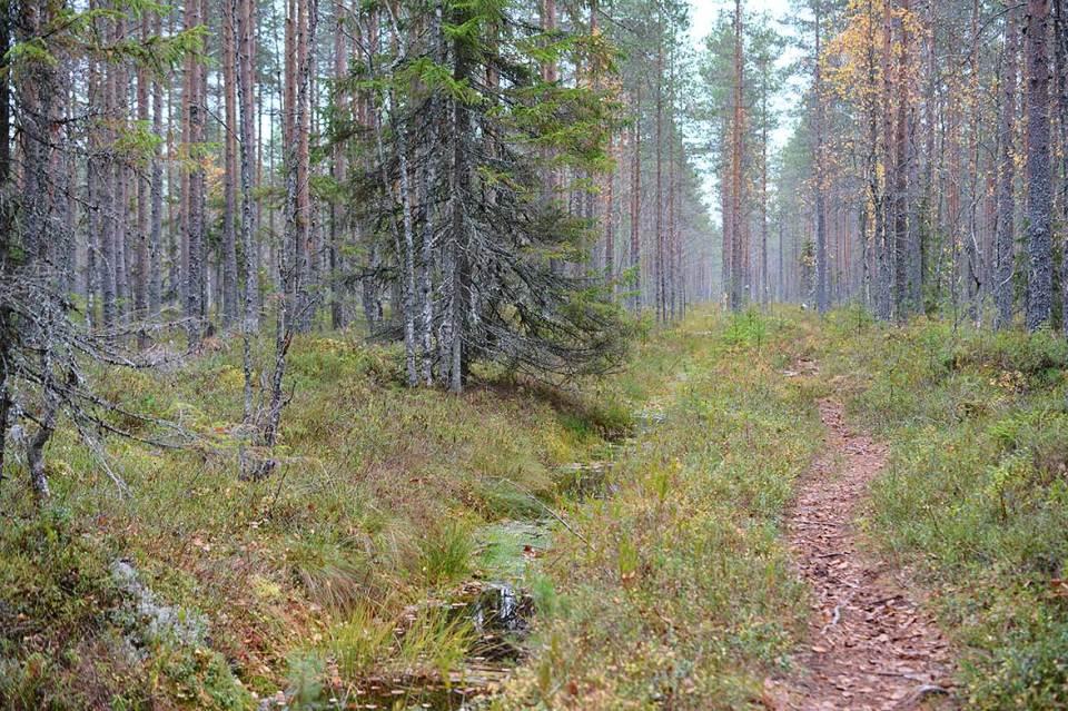 Polku, puro ja metsä