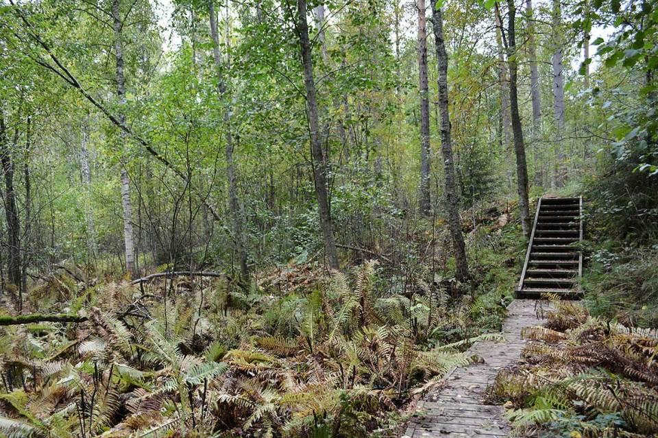 Laudoitetut polut vievät luontopolun läpi.