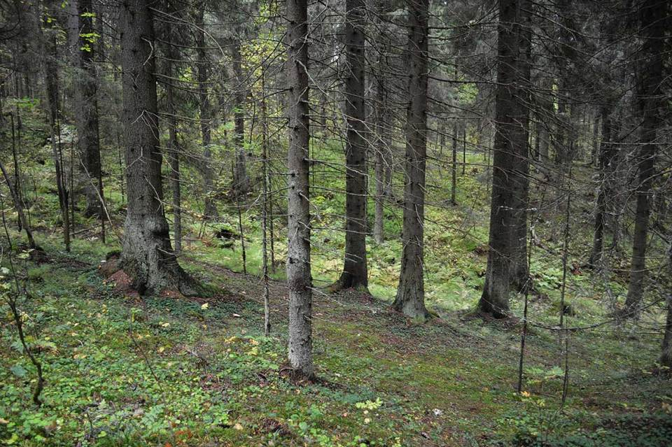 Metsämaisema Halmejoen luontopolulla.