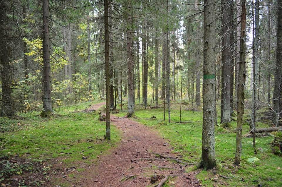 Vihreät maalimerkit Halmejoen polulla.