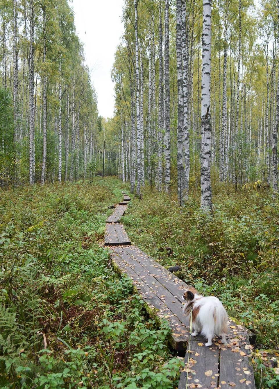 Luontopolku ja pitkospuut Ranta-Toivalassa
