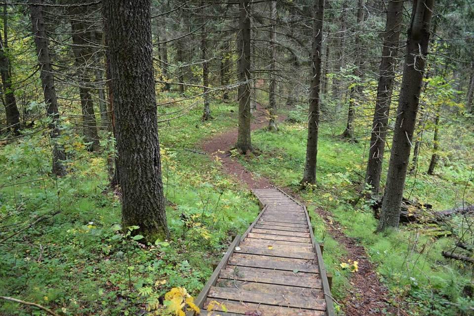 Portaat alas ja takaisinpäin Kuopion luontopolulla.