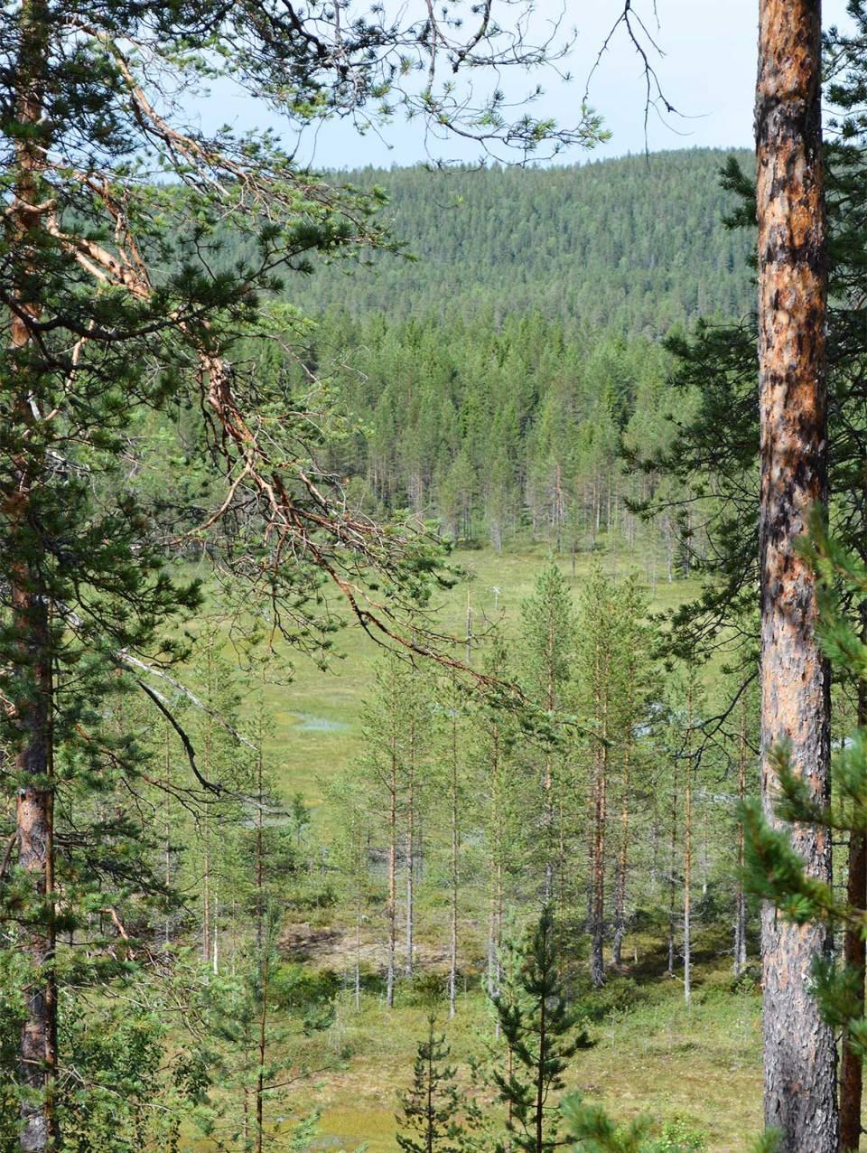 Suomaisemaa puiden välissä Syötten Pytkyn pyrähdyksellä