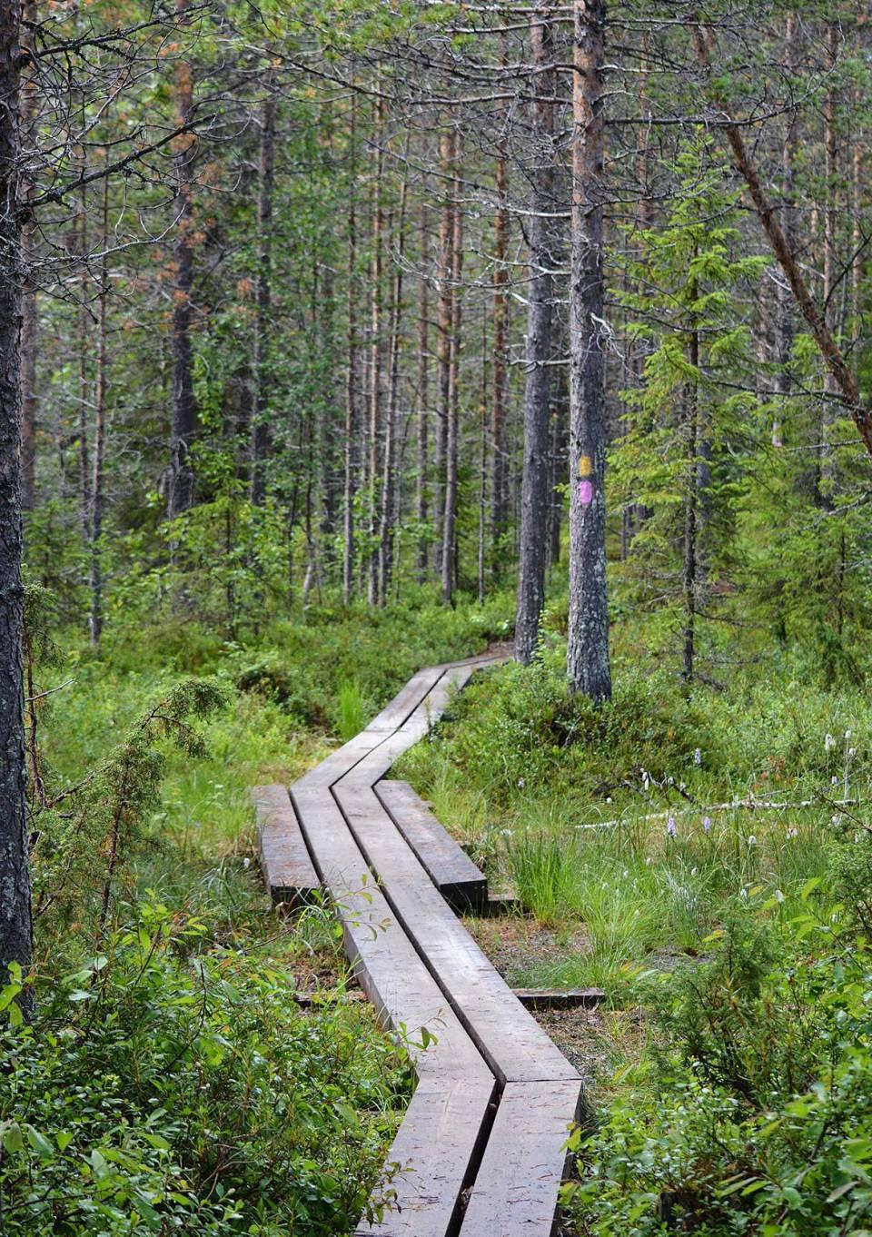 Polku mutkittele metsään Pytkyn pyrähdyksen reitillä