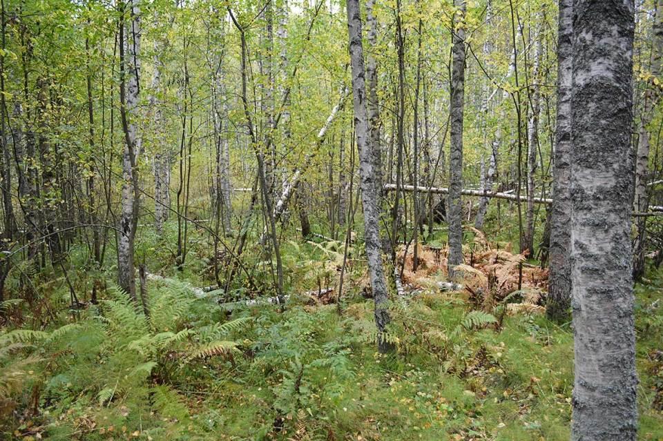 Halmejoen luontopolku on lähes kokonaisuudessaan EU:n Natura-verkostoon kuuluvalla suojelualueella