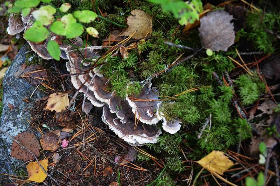 Sieniä Vanuvuorella.
