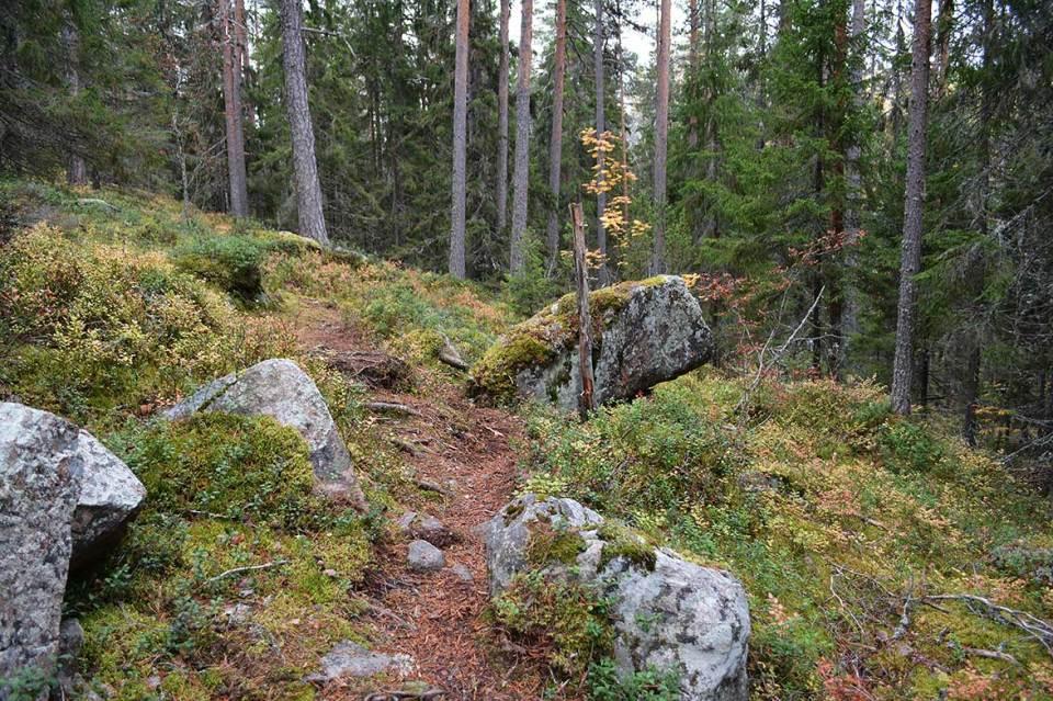 Kiviä Vanuvuorella.