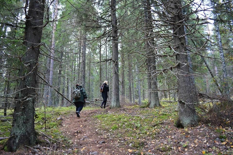 Polku vie ylöspäin Vanuvuorelle ja Ukko-Vanulle.