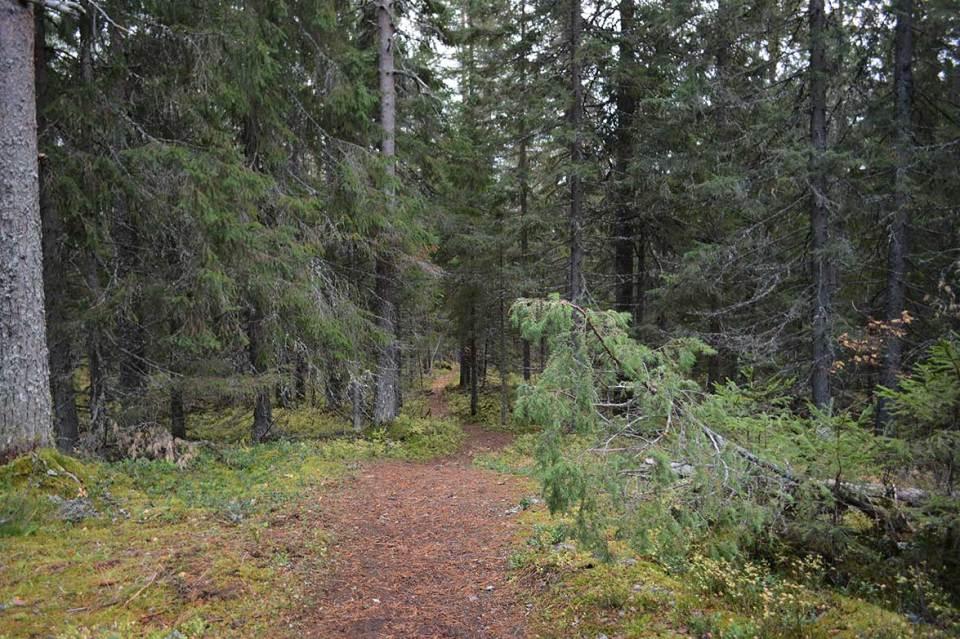 Vanuvuoren huipulta polku lähtee takaisin alaspäin kohti pohjoista.