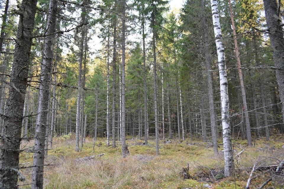 Saavutaan aukeammalle kohdalle ja pois metsästä.