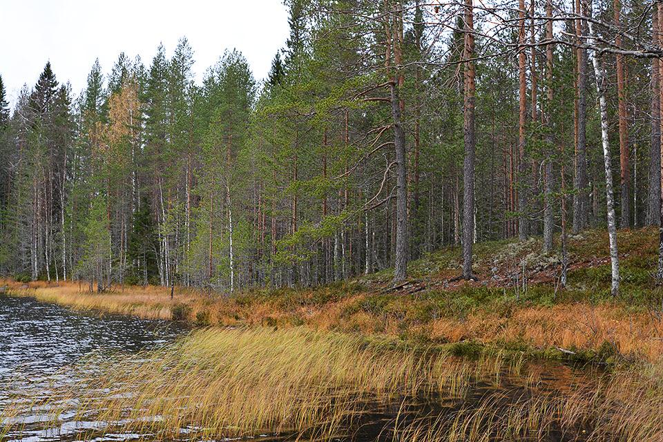 Autiojärvi Tiilikkajärven kansallispuistossa