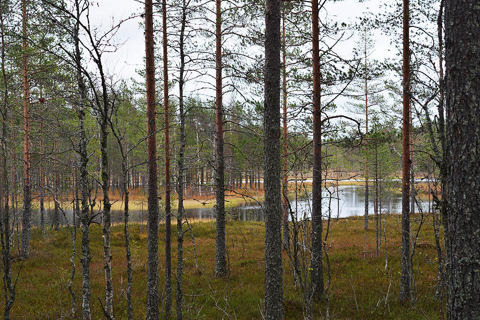 Autiojärvi pilkistää puiden välistä.