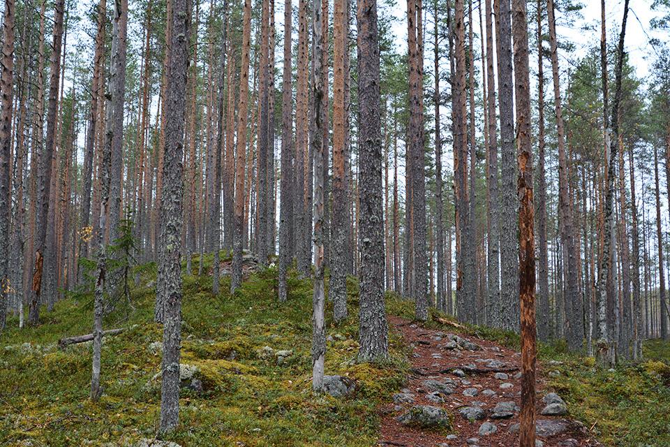 Uiton kierrolla Tiilikkajärven kansallispuistossa harjumaisemat ovat upeita.