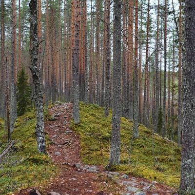 Tiilikkajärven kansallispuiston Uiton kierron harjumaisemia