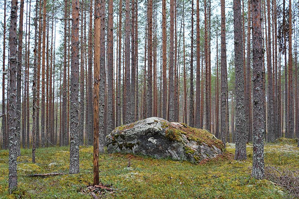 Iso kivi keskellä metsää Uiton kierron loppupäässä.