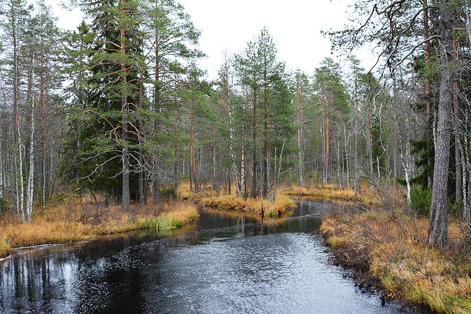Uiton kämpän edustalla virtaava joki.