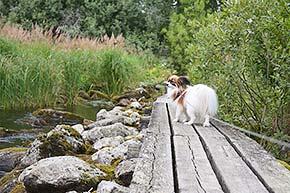 Konnuksen kanavan luontopolku Leppävirralla