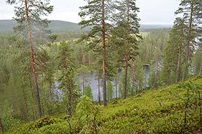Pytkyn Pyrähdys Syötteen kansallispuistossa