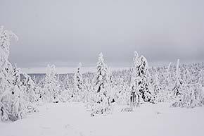 Riisitunturin kansallispuistossa talvella