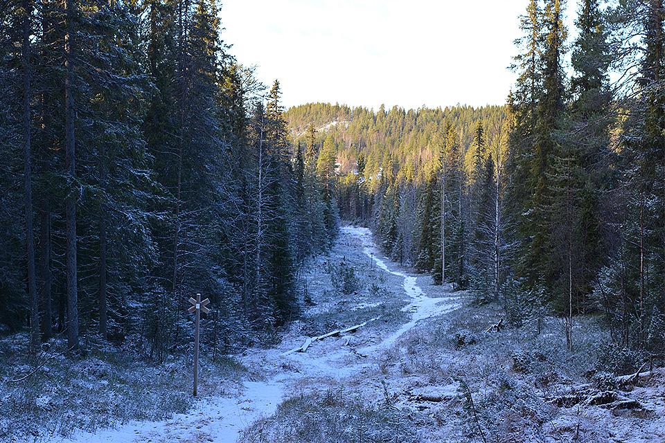Leveä polku kulkee alaspäin Sinipyrstön pyrähyksellä.